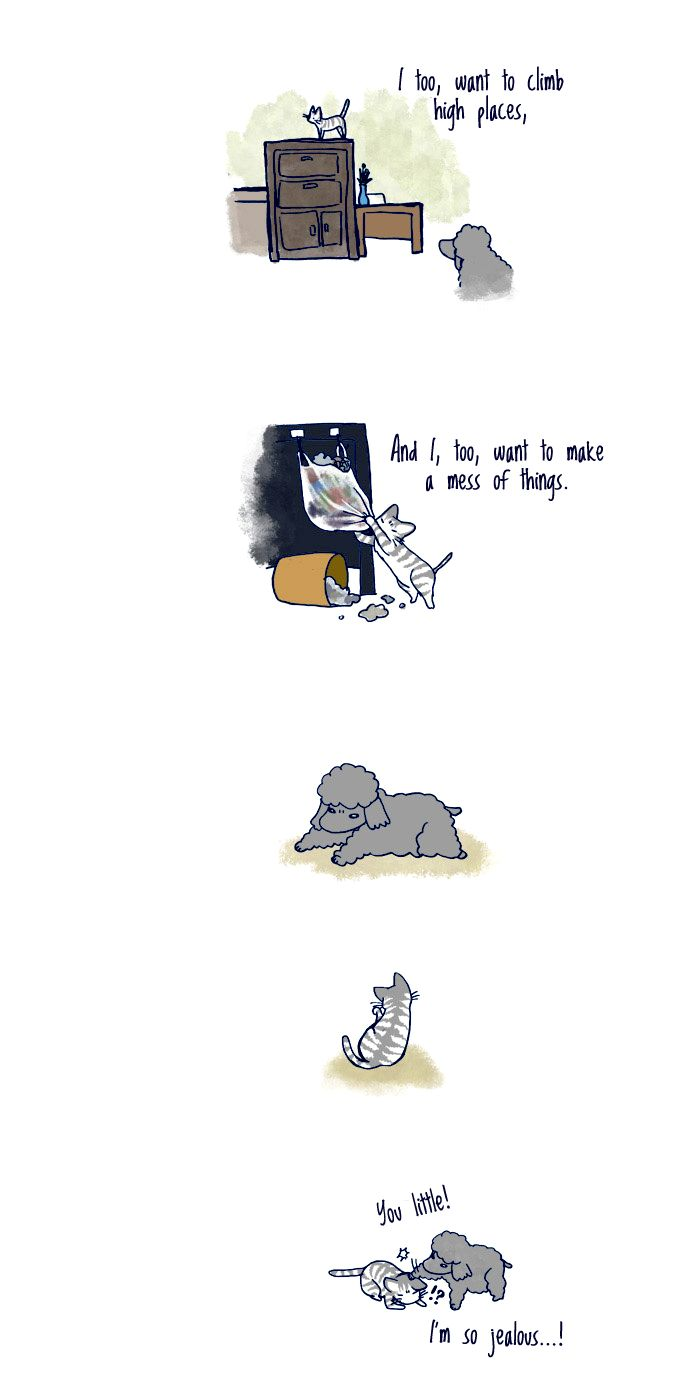 My Young Cat and My Old Dog 56 Page 2