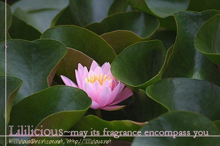 Secret Garden (AMAGATSU Toriko) 1 Page 2